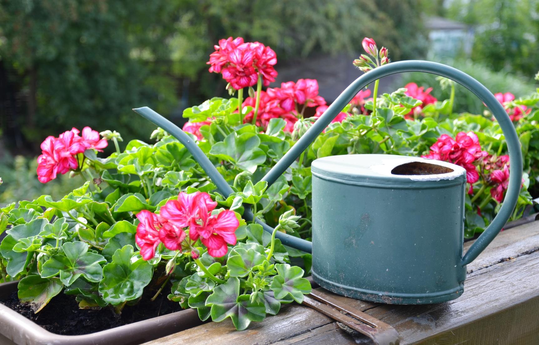 pflanzen für den balkon – blütenmeer für den sommer, Gartengerate ideen